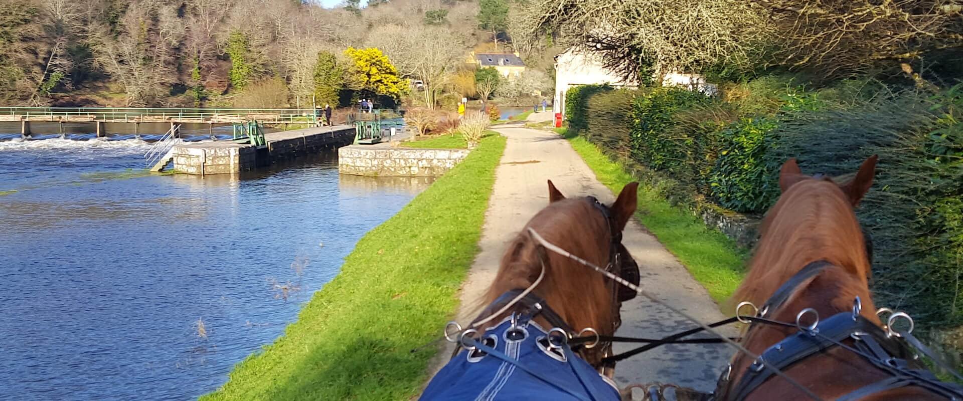 Balade à cheval à Deauville en calèche